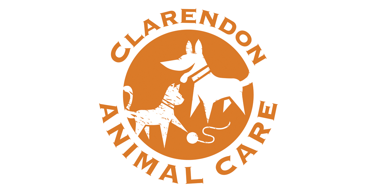 arlington-va-turley-trot-pilgrim-sponsor-clarendon-animal-care